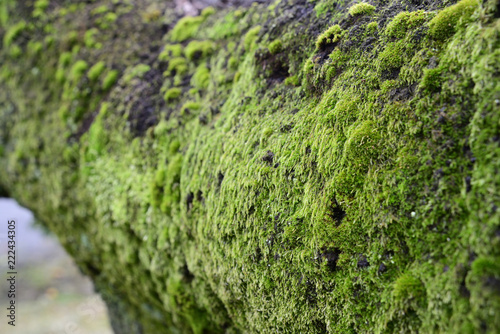 Fotografie, Obraz  moss on tree