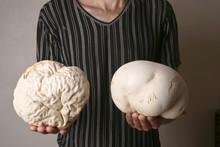 Man Holding Two Mushrooms Giant Puffball As Brain. Big Edible Mushrooms Calvatia Gigantea. Concept Brain Wrinkles.