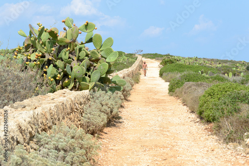 Natural reserve of Vendicari, near Syracuse in Sicily(Italy), august 2018. A lonely man walks on a dirt path surrounded by a typical mediterranean landscape with a prickly pear plant in the foreground