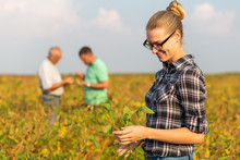 Group Of Farmers Standing In A Field Examining Soybean Crop.