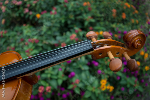Fotografiet  violin about plants and flowers