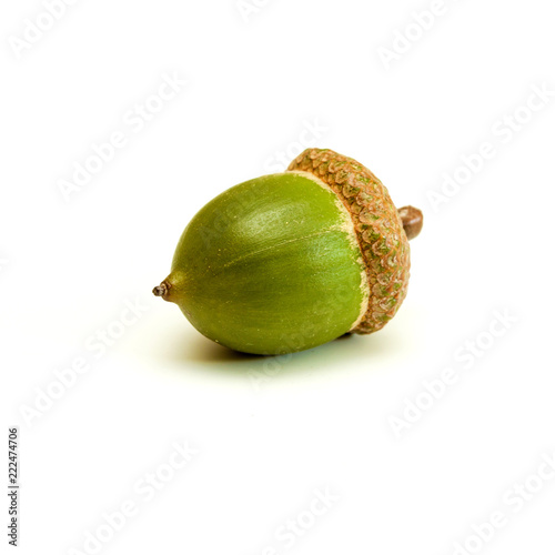 Green acorn on a white.