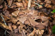 Camo Copperhead Snake