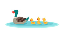 Mother Duck And Little Ducks I...