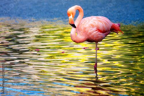 Foto op Aluminium Flamingo FLAMENCO EN ESTANQUE