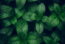 Mint Green Leaves Pattern Back...