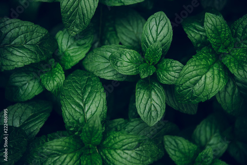 Mint green leaves pattern background