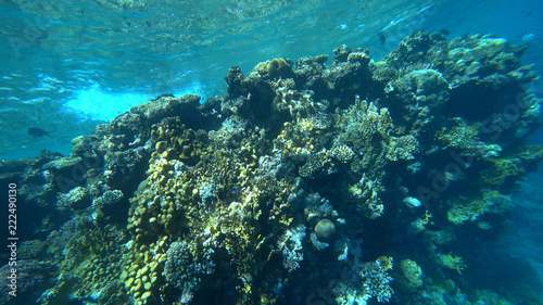 Spoed Foto op Canvas Koraalriffen the coral reef