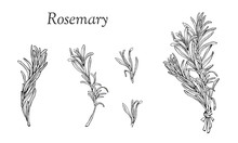 Set With Rosemary Hand Drawn Outline Elements
