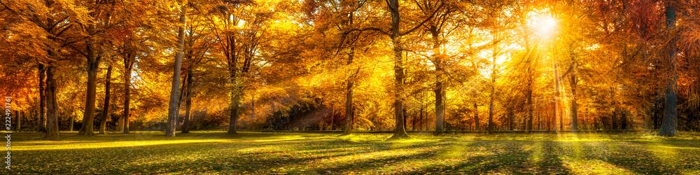 Fototapeta Wald Panorama im Herbst als Hintergrund