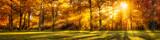 Fototapeta Las - Wald Panorama im Herbst als Hintergrund