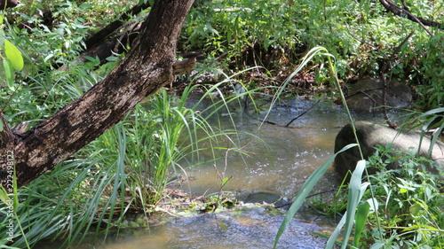 愛知 大府 二ツ池公園 雨上がり 森の中のせせらぎ Canvas Print