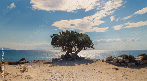 Photo  lonely tree on a greek beach