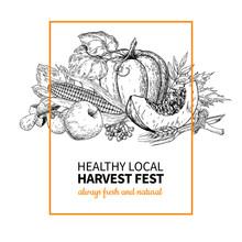 Harvest Festival. Hand Drawn Vintage Vector Illustration With Group Of Vegetables, Fruits, Leaves. Farm Market