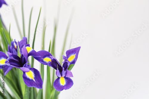 Foto op Plexiglas Iris Purple irises on a white background