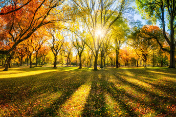 Kolorowy jesień las w świetle słonecznym