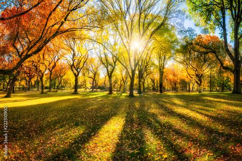 Obraz Bunter Herbstwald im Sonnenlicht - fototapety do salonu