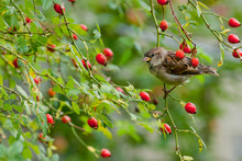 Bird Clinging On A Green Branch With Red Berry Fruit