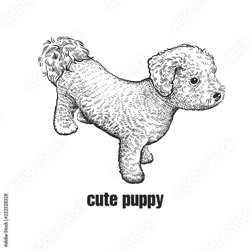 Valokuva Bichon Frize dog. Cute puppy. Black and white hand drawing