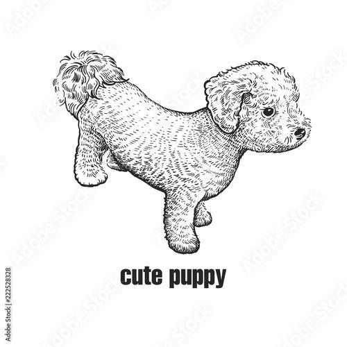 Fényképezés Bichon Frize dog. Cute puppy. Black and white hand drawing