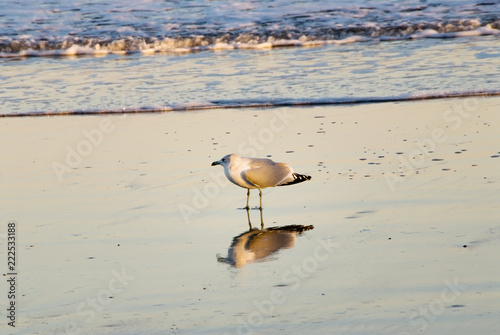 Photo  Seagull Standing in the Water of the Atlantic Ocean