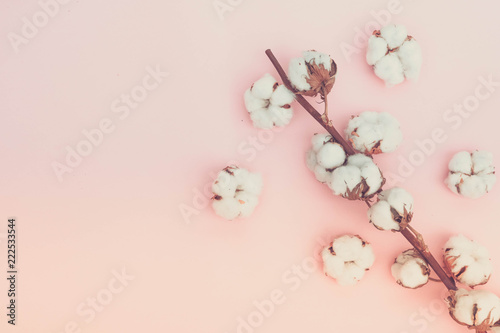 Tuinposter Magnolia Raw cotton branches with buds on plain pink background, flat lay with copy space, retro toned