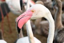 A Flamingo Portrait