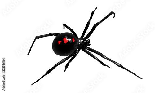 Photo Spider