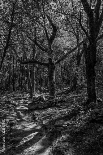 Fotografie, Obraz  Creepy tree