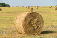 Bales Of Hay On The Field. The Hay Harvest In The Fall.