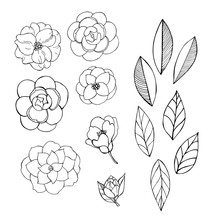 Hand Drawn Camellia Flowers.