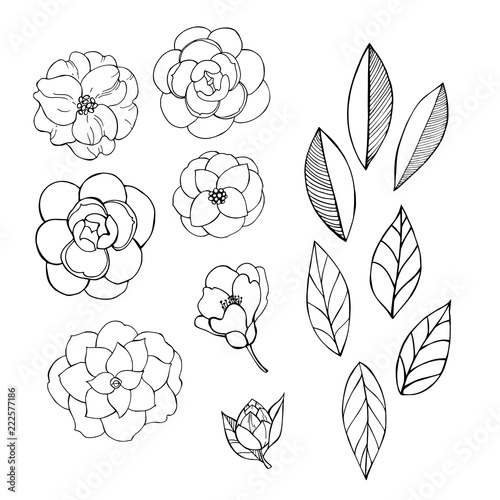Canvas Hand drawn camellia flowers.