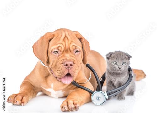 maly-kotek-i-szczeniak-ze-stetoskopem