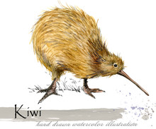 Kiwi Bird Hand Drawn Watercolo...