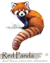 Red Panda Hand Drawn Watercolor Illustration