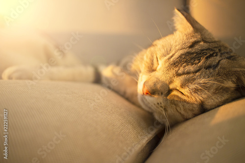 Foto op Aluminium Kat cute cat sleeping on the couch