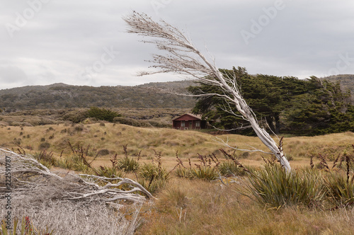 Fotografie, Obraz  Skeletal, windswept tree in the foreground with a trampers' hut in the middle-ground on Stewart Island, Rakiura, New Zealand
