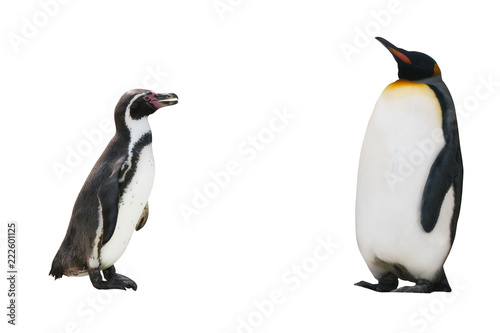 Foto op Aluminium Pinguin two penguin on white background isolated