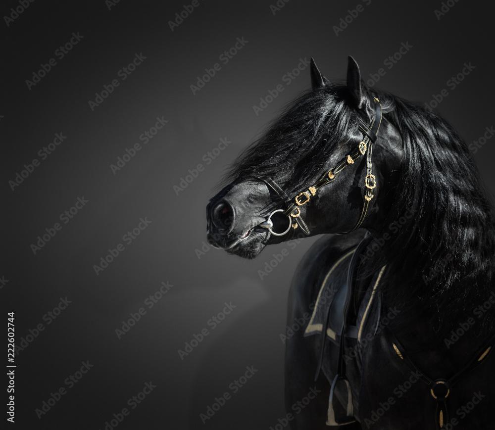Fototapety, obrazy: Portrait of black Pura Spanish stallion in authentic bridle on dark background.