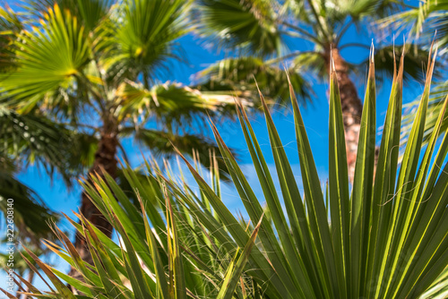 twigs of a palm tree with blue sky