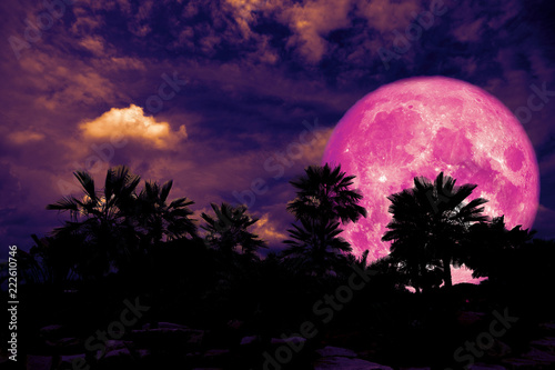 full pink moon back silhouette palm tree in dark night heap cloud
