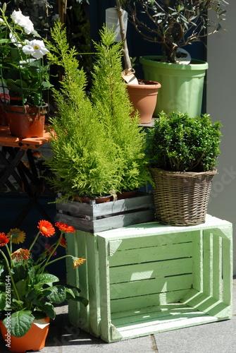 Valokuva Ville de Vernon, plantes vertes et arbustes, caisse verte, chez un fleuriste, dé