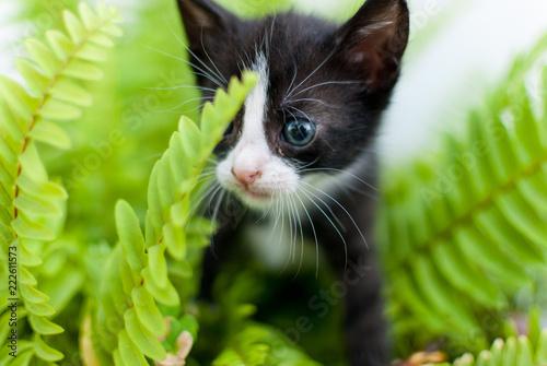 gatito entre helechos Canvas-taulu