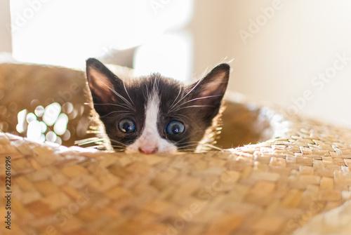Fotografía  gatito escondido en sombrero