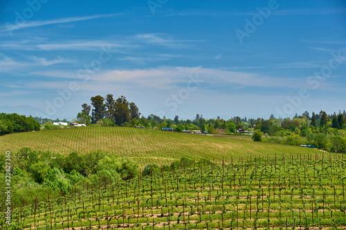 Staande foto Verenigde Staten Vineyards in California, USA