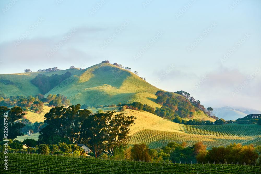 Fototapety, obrazy: Vineyards in California, USA