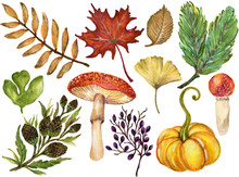 Colorful Watercolor Gouache Autumn Fall Branches With Leaves And Animals, Vegetable Hand Drawn Illustration