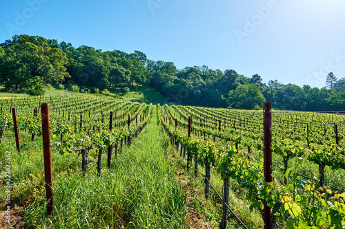 Foto op Canvas Verenigde Staten Vineyards in California, USA