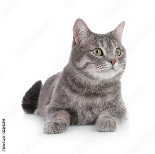 Cadres-photo bureau Chat Portrait of gray tabby cat on white background. Lovely pet