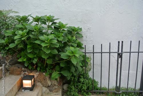 Fotografie, Obraz  벽